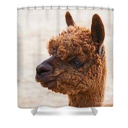 Woolly Alpaca Shower Curtain by Jerry Cowart