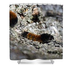 Woolly Bear Caterpillar Shower Curtain by Christina Rollo