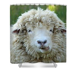 Wooly Sheep Shower Curtain by Ramona Johnston