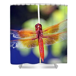 Wounded Warrior Shower Curtain by Shoal Hollingsworth