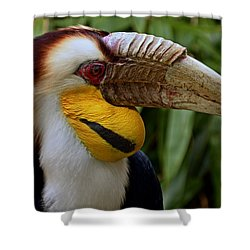 Wreathed Hornbill Shower Curtain by Eric Albright