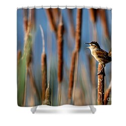 Wren Singing Shower Curtain