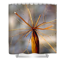 Shower Curtain featuring the photograph Wth? by Joe Schofield