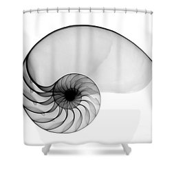 X-ray Of Nautilus Shower Curtain