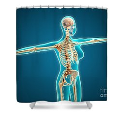 X-ray View Of Female Body Showing Shower Curtain by Stocktrek Images