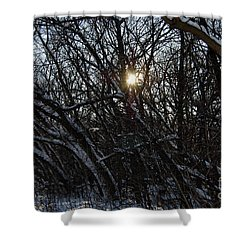 Yearning For Spring By Jammer Shower Curtain by First Star Art