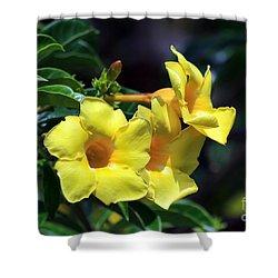 Shower Curtain featuring the photograph Yellow Allamanda by Teresa Zieba