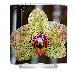Yellow And Maroon Orchid Shower Curtain