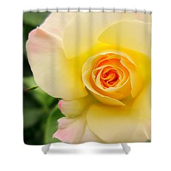 Yellow And Pink Beauty  Shower Curtain