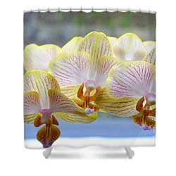 Yellow And Pink Orchids Shower Curtain by Tine Nordbred