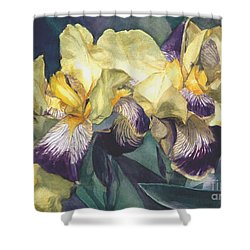 Yellow And Purple Streaked Irises Shower Curtain by Greta Corens