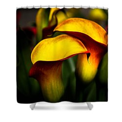 Yellow And Red Calla Lily Shower Curtain by Menachem Ganon