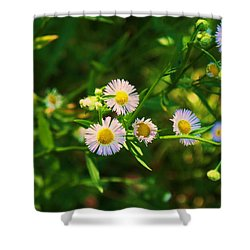 Yellow And White Dasies Shower Curtain by Eric  Schiabor