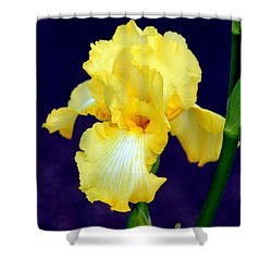 Yellow Bearded Iris Shower Curtain by Kathy  White