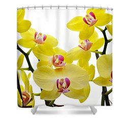 Yellow Beauties Shower Curtain by Tine Nordbred