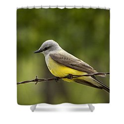 Yellow-bellied Fence-sitter Shower Curtain by Gary Holmes