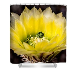 Yellow Cactus Flower Shower Curtain by  Onyonet  Photo Studios