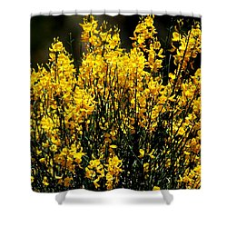 Yellow Cluster Flowers Shower Curtain by Matt Harang