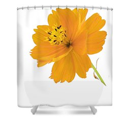Yellow Coreopsis Shower Curtain