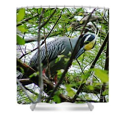 Shower Curtain featuring the photograph Yellow Crowned Night Heron In Display by Lizi Beard-Ward