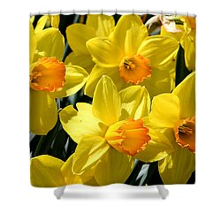 Yellow Daffodils Shower Curtain by Menachem Ganon