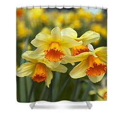 Yellow Daffodils Shower Curtain by Peter French