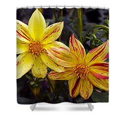 Yellow Dahlia Shower Curtain