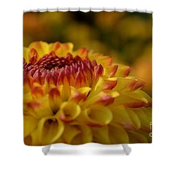 Yellow Dahlia Red Tips Shower Curtain