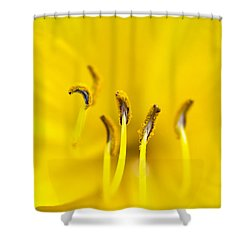 Yellow Shower Curtain by Dee Cresswell