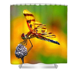 Yellow Dragon Shower Curtain