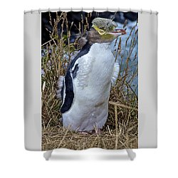Endangered Yellow Eyed Penguin Hoiho Shower Curtain by Venetia Featherstone-Witty