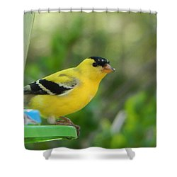 Shower Curtain featuring the photograph Yellow Finch by Betty-Anne McDonald