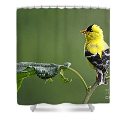 Shower Curtain featuring the photograph Yellow Finch by Nava Thompson