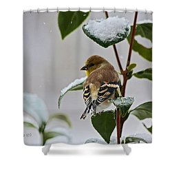 Goldfinch On Branch Shower Curtain
