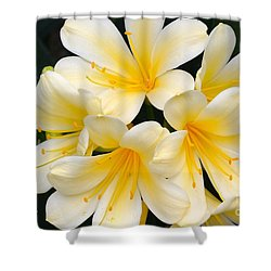 Shower Curtain featuring the photograph Clivia Yellow Flowers by Jeannie Rhode