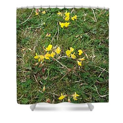 Yellow Flowers Shower Curtain by John Williams