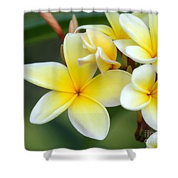 Yellow Frangipani Flowers Shower Curtain