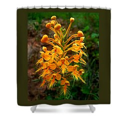 Shower Curtain featuring the photograph Wild Yellow Fringed Orchid by William Tanneberger