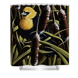 Yellow Headed Blackbird And Cattails Shower Curtain