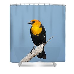 Shower Curtain featuring the photograph Yellow Headed Blackbird by Jack Bell