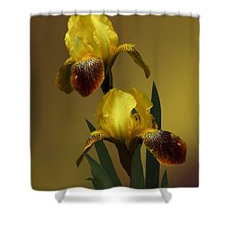 Yellow Iris Shower Curtain by Judy  Johnson