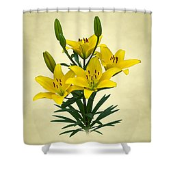 Yellow Lilies Shower Curtain by Jane McIlroy