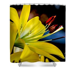 Yellow Lily Anthers Shower Curtain by Robert Bales