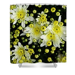 Yellow Mums Shower Curtain by Lyric Lucas