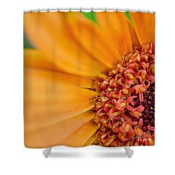 Shower Curtain featuring the photograph Yellow Orange Gerbera Squared by TK Goforth