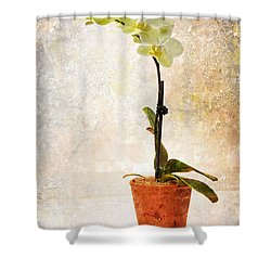 Shower Curtain featuring the photograph Yellow Orchid by Patti Deters