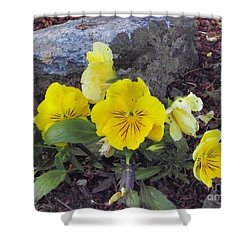 Shower Curtain featuring the photograph Yellow Pansies by Charles Robinson