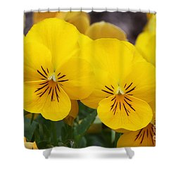 Yellow Pansies Shower Curtain by Judy Whitton