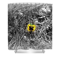 Shower Curtain featuring the photograph Yellow Pansy by Tara Potts