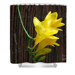 Yellow Petals Shower Curtain by HEVi FineArt
